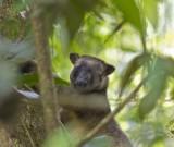 featured image Von Eacham nach Georgetown: Tablelands, Wasserfälle und Tree Kangaroo