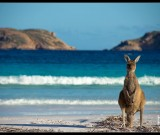 featured image Cape Le Grand National Park and Lucky Bay