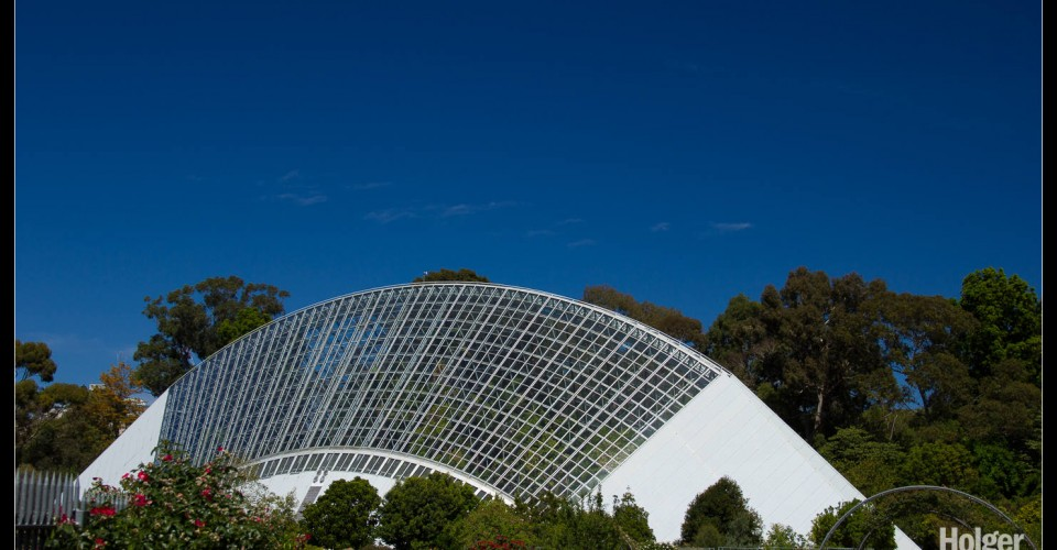 featured image Adelaide Botanic Gardens