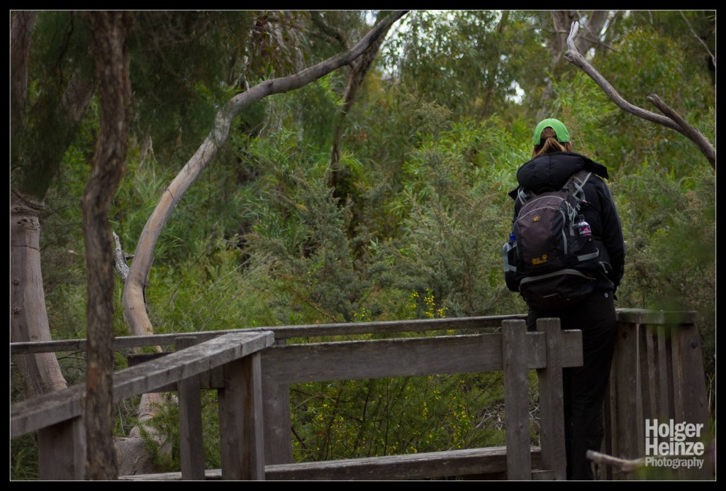 Kangaroo Island: Hier gibt's kein Schnabeltier
