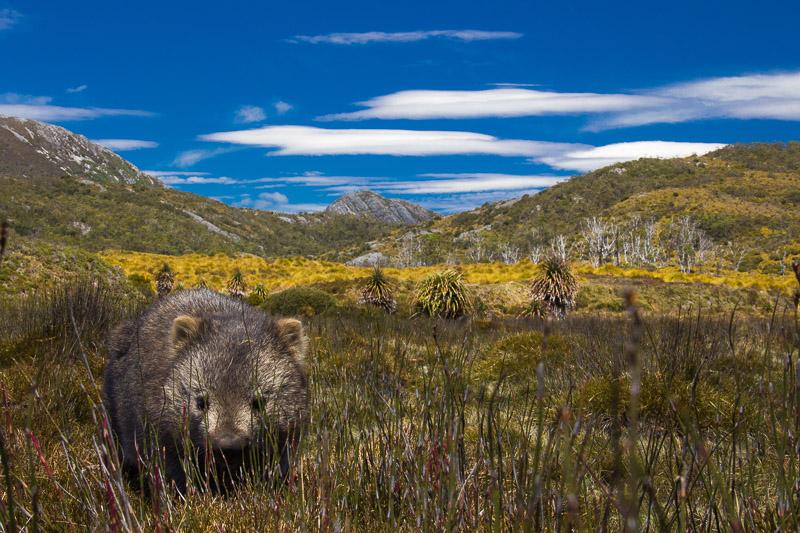 Juni 2013: Wombat Time!